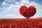 זה רק הלב